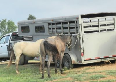 Horses resting by trailer