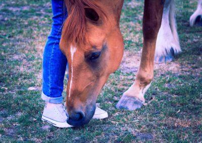 animal-domestic-grass-1128836-min